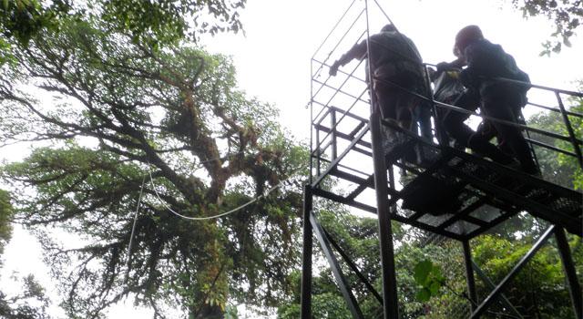 Tarzan Swing in Selvatura Park