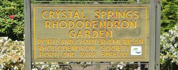 Photo Tour: Portland's Crystal Springs Rhododendron Garden