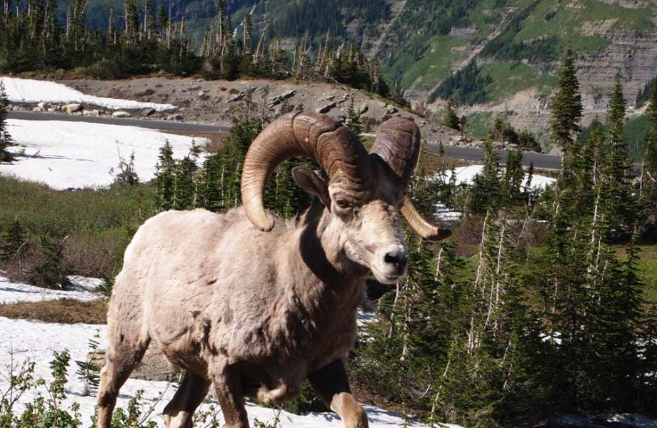 Photo Tour of Glacier National Park Wildlife