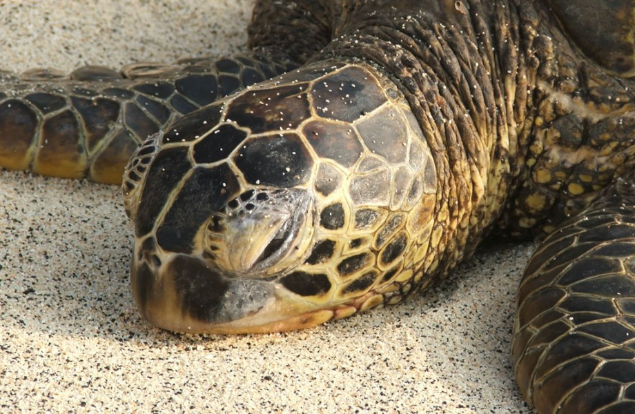 Photo of the Week: Green Sea Turtle