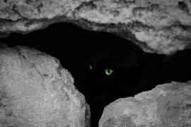 Photo of the Week: Green Eyed Cat in Sarcophagus