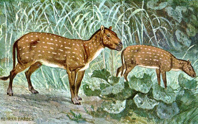 The first horse hyracotherium