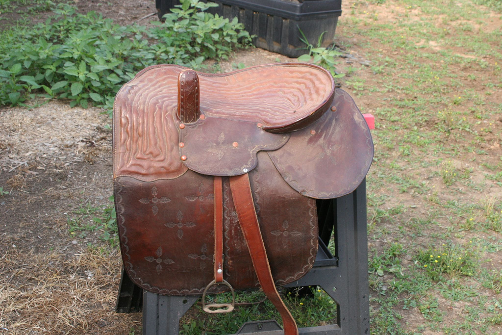 Side Saddle picture by Jessicamera11