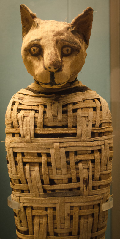 Mummified Cat From Egypt