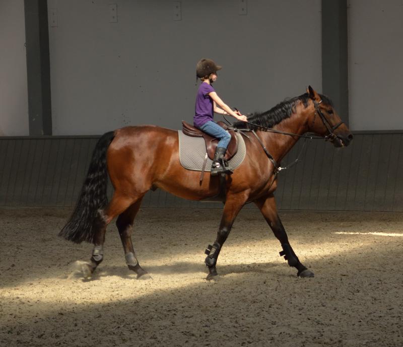 Horse Riding in Poland