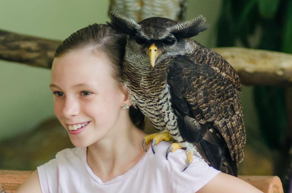 Sydney with the Malay Eagle Owl