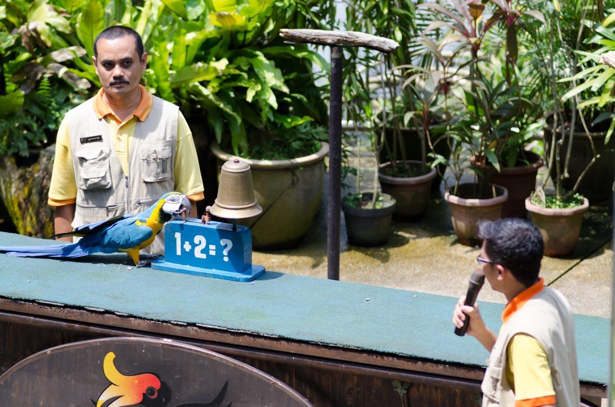 KL Bird Park Bird Show