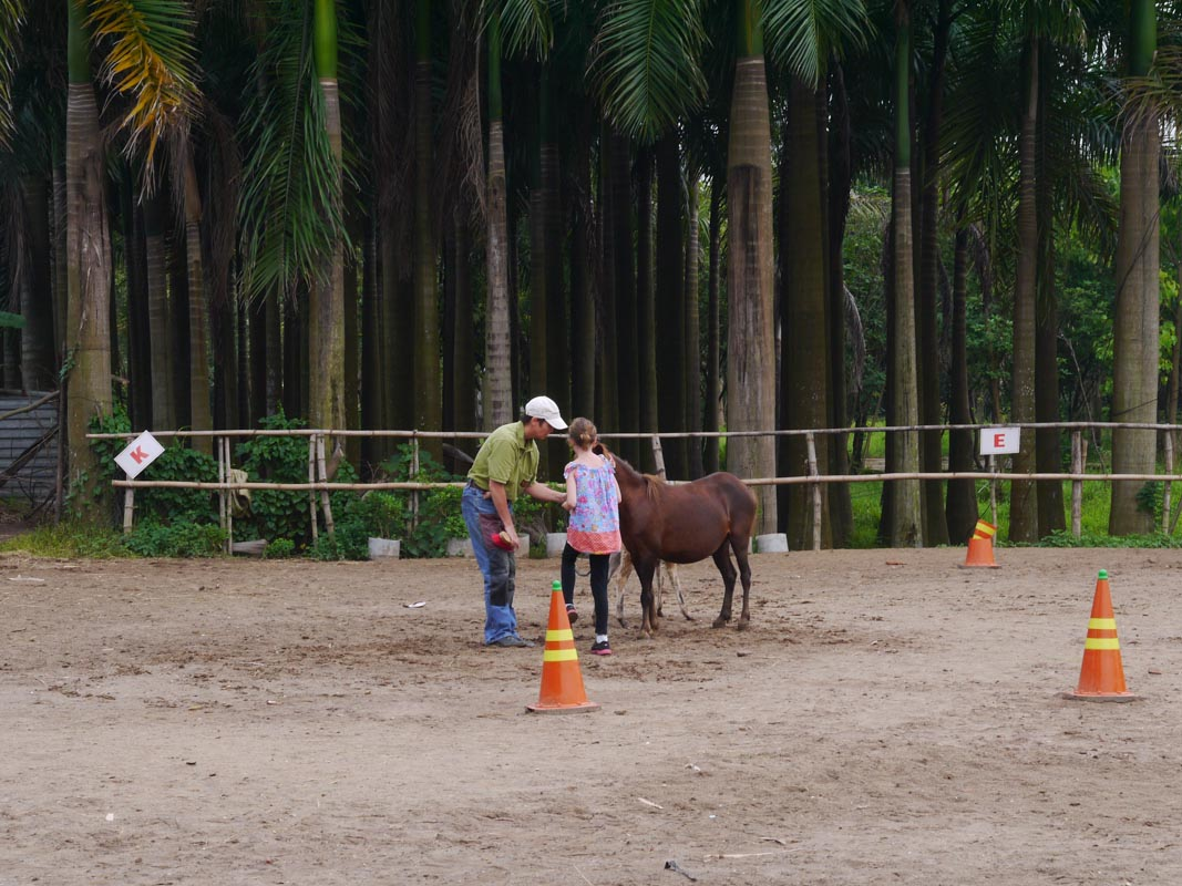 The cute little pony Sydney got to work with while in Hanoi