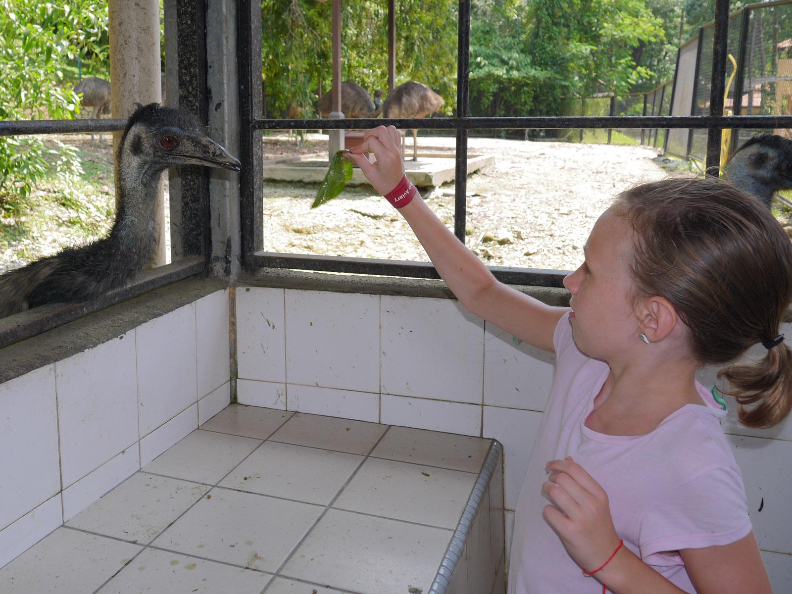 Me feeding the Emu