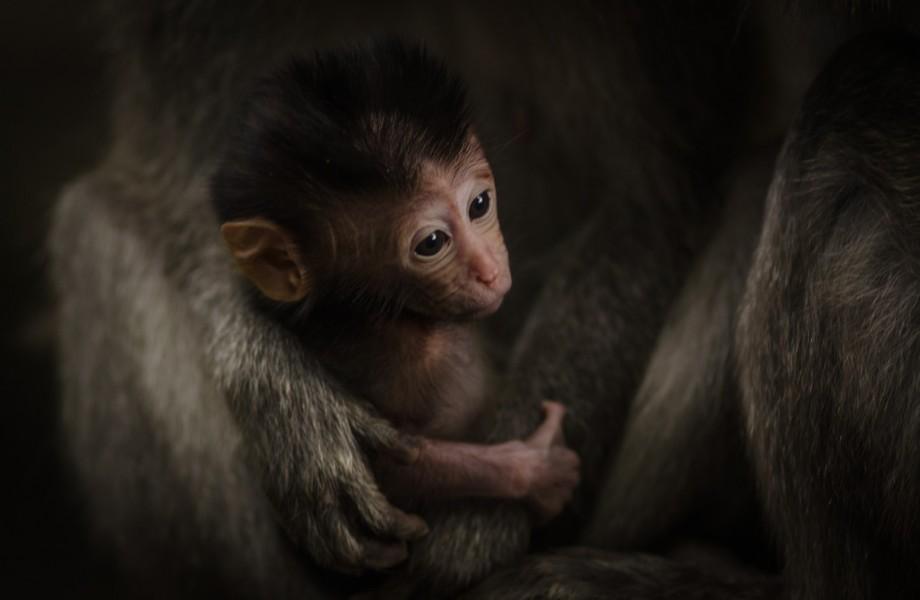 Photo of the Week: Baby Monkey at Ubud's Monkey Forest