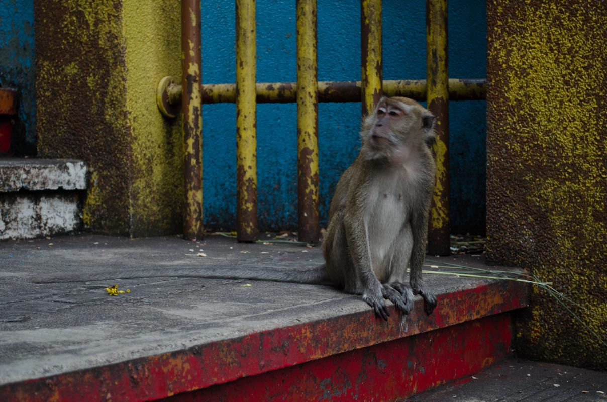 Cheeky macaques at Batu Caves