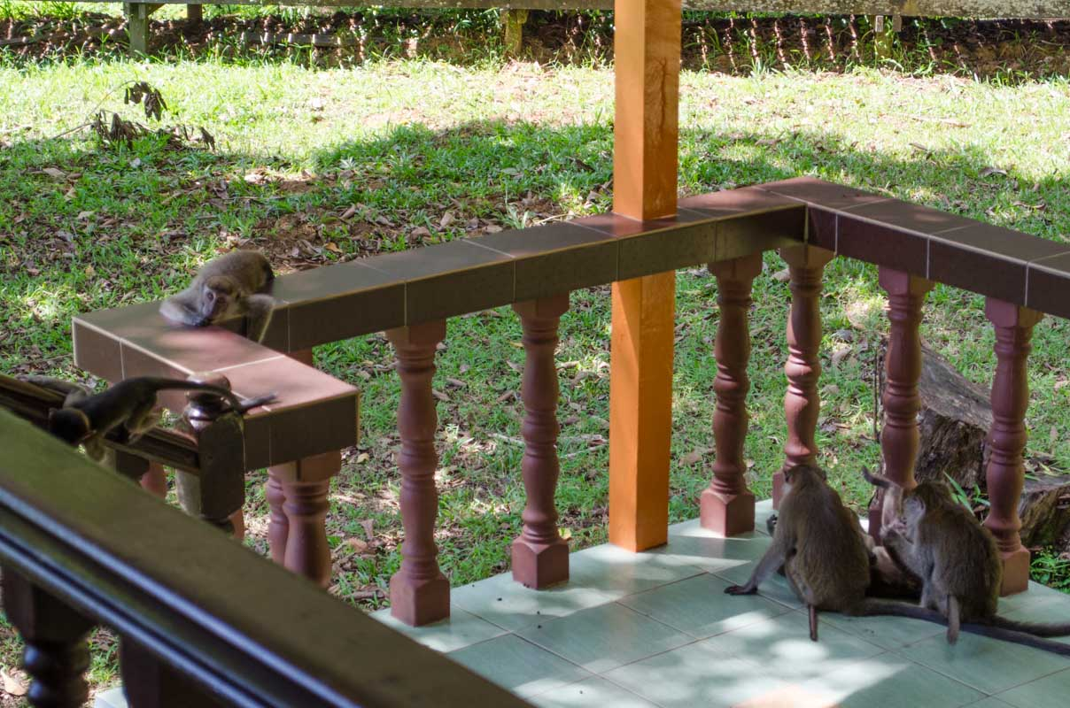 The naught macaques on our porch