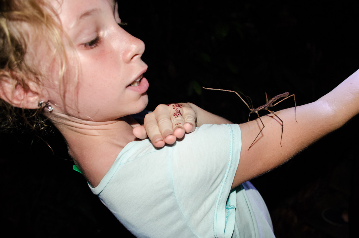 A stick bug crawling on my arm