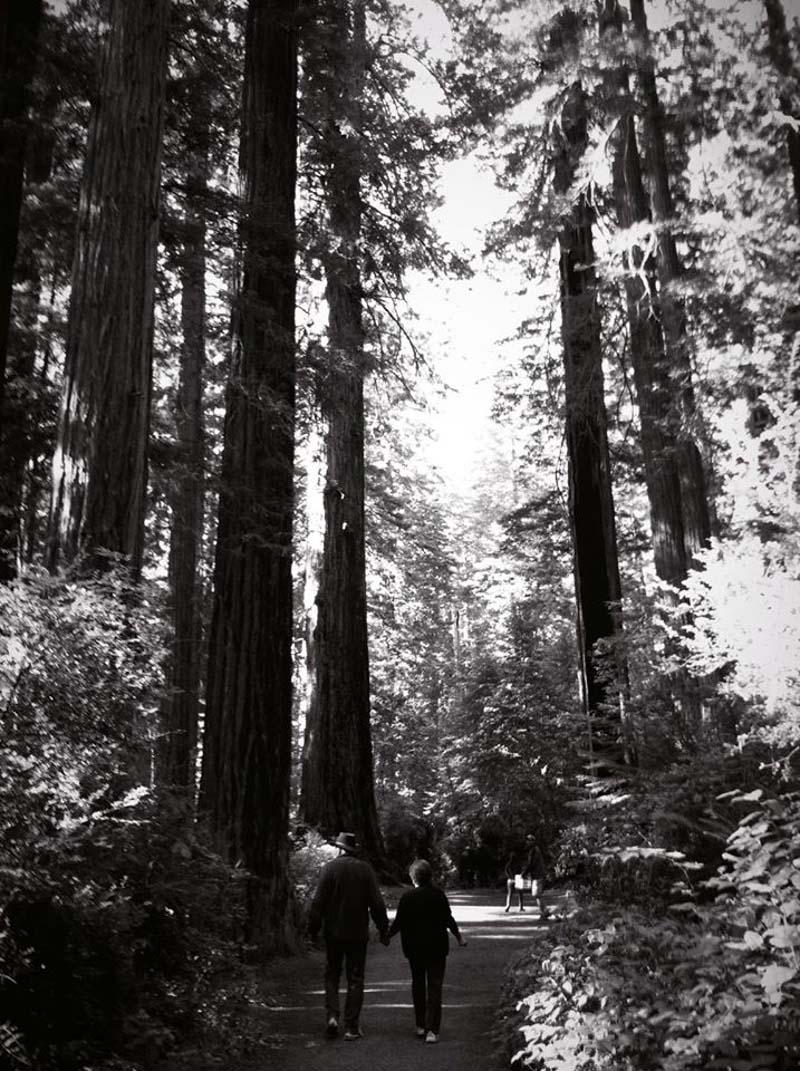 Parents in Redwoods