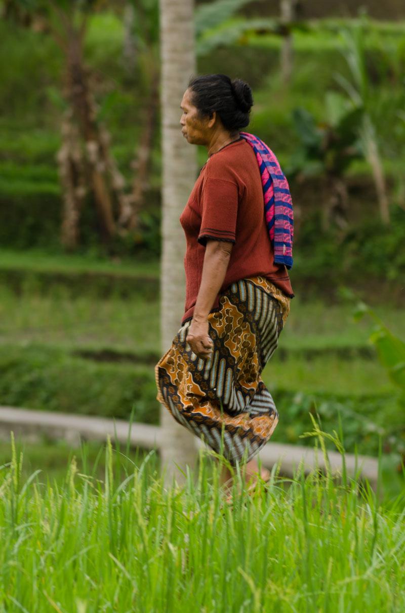 Rice farmer behind our house