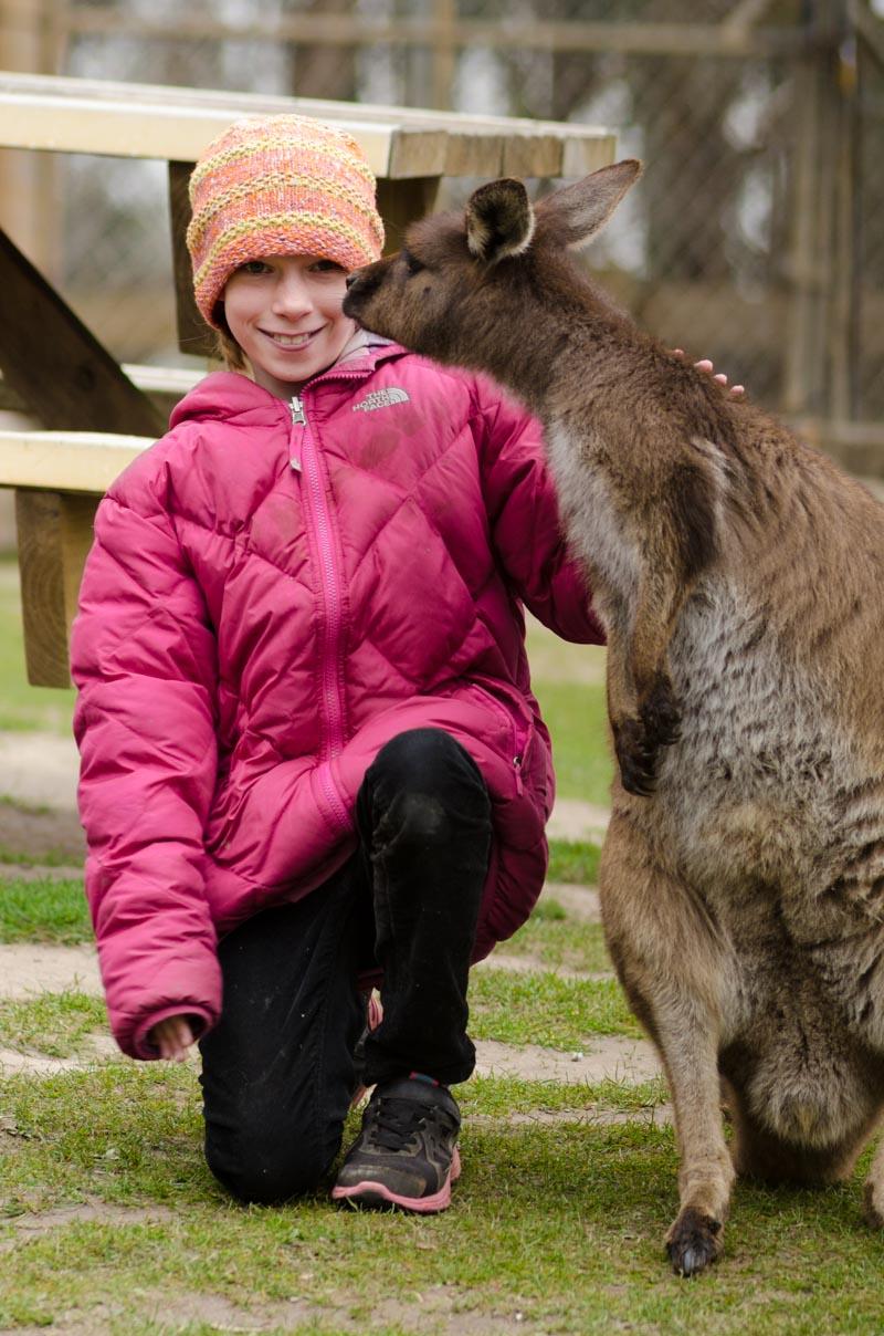 Kangaroo at Ballarat Wildlife