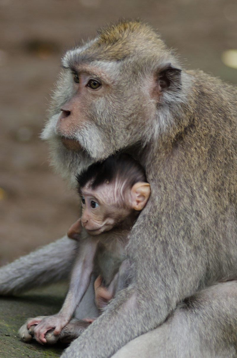 Monkey Forest-13