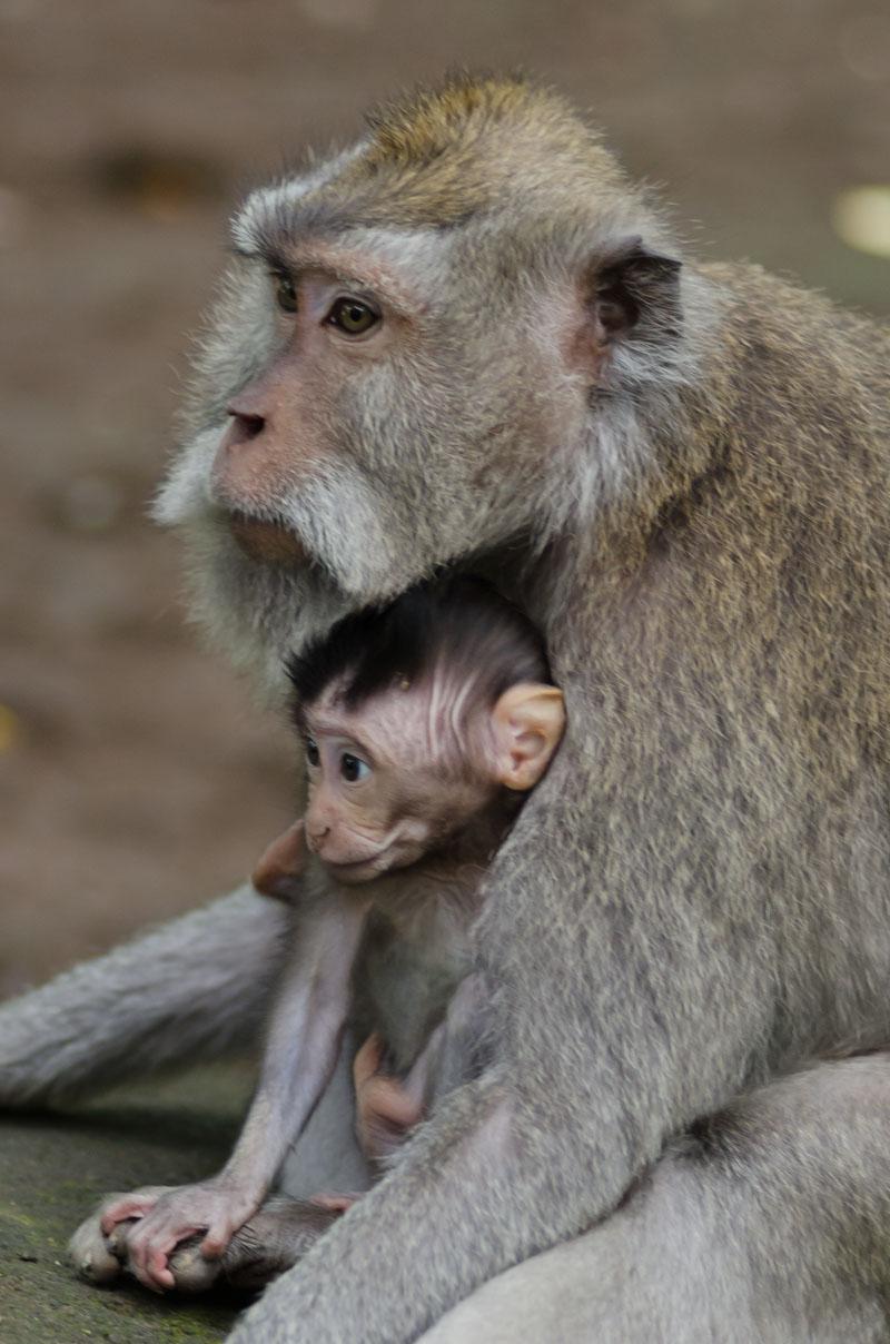 Monkey Forest-13