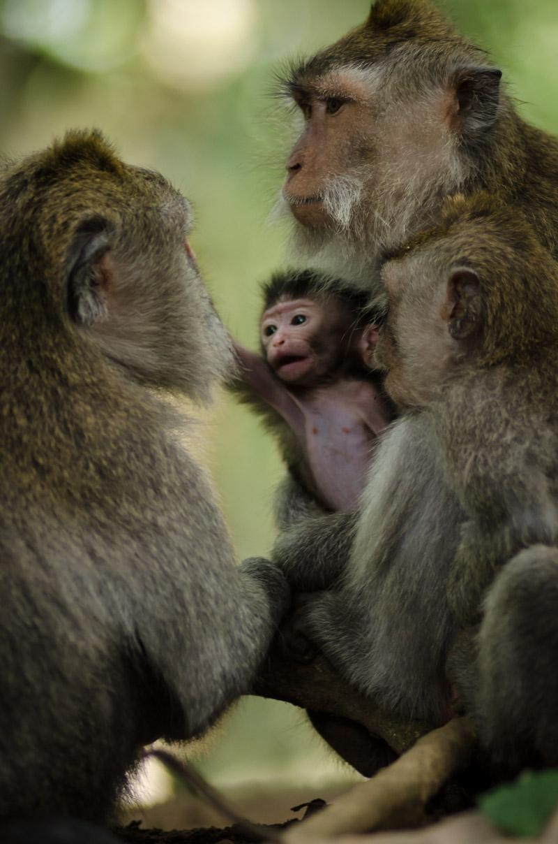 Monkey Forest-14