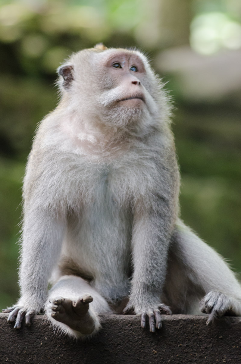Monkey Forest-4