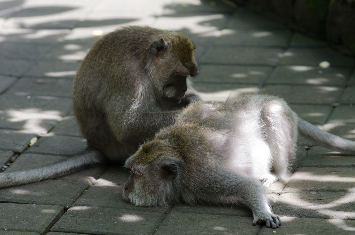 Monkey Forest-6