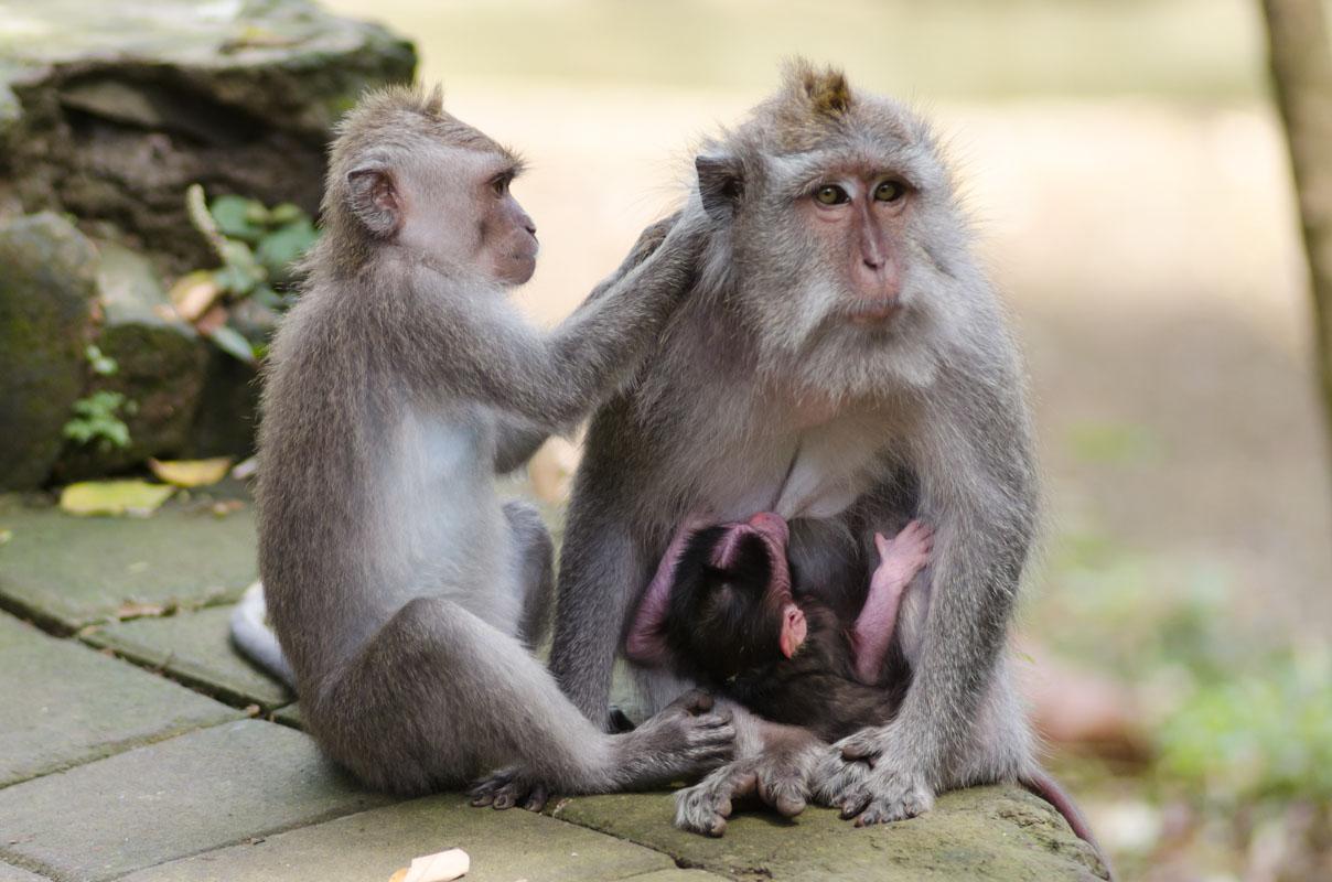 Monkey Forest-7