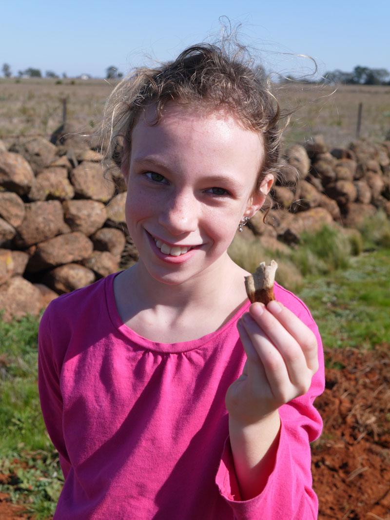 Kangaroo Tooth